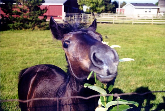 image of horse with weed in its mouth